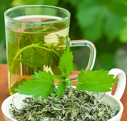 Herbata z pokrzywy - naturalny antybiotyk http://zdrowszeznatury.pl