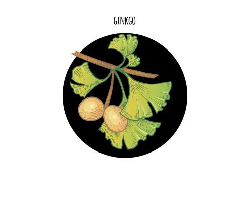Image of plant Ginkgo biloba