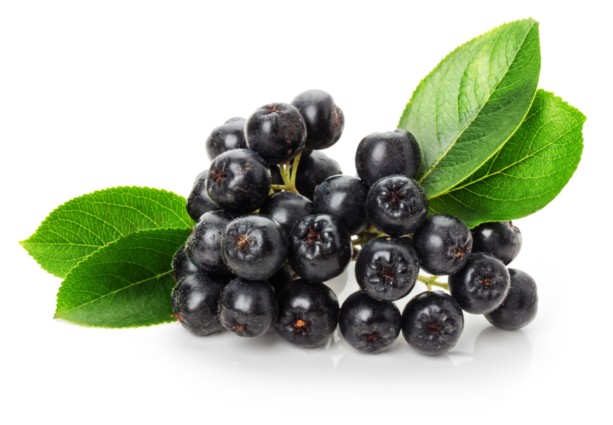 black ashberry isolated on the white background